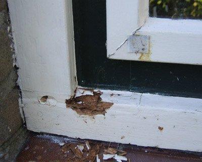 Houtrot - wat kost een houtrotreparatie?